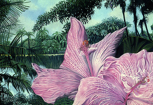 Pink Hibiscus by Stephen Mack