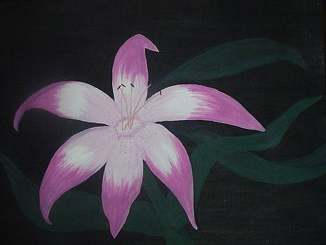 Pink Lily by Melanie Blankenship