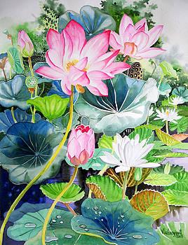 Pink Lotus and White Water Lilies by Vishwajyoti Mohrhoff