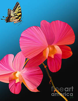 Pink Lux Butterfly by Rand Herron