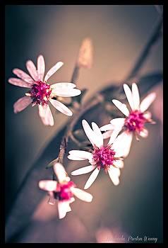 Pink by Michaela Preston