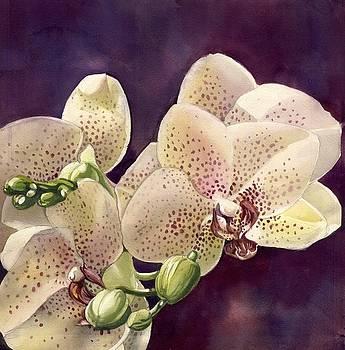 Alfred Ng - pink orchid