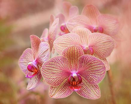 Pink Orchids by Robert FERD Frank