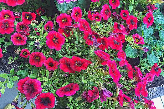 Cindy Boyd - Pink Petunias