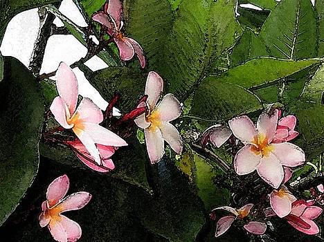 Pink Plumeria by Halle Treanor