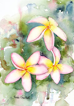 Pink Plumeria by Renee Chastant