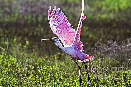 Pink Power by Gary Holmes