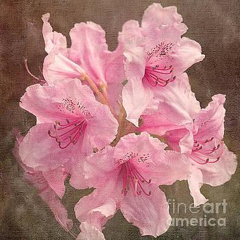 Pink Rhododendron by Liz Alderdice