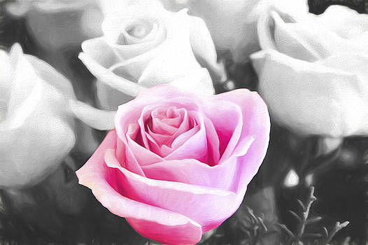 Pink Rose Stand Out by Daphne Sampson