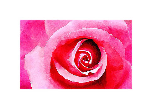 Pink Rose by Tears of Colors Gallery