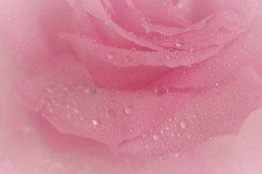 Pink Scent by The Art Of Marilyn Ridoutt-Greene