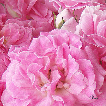 Pink by Tom Romeo