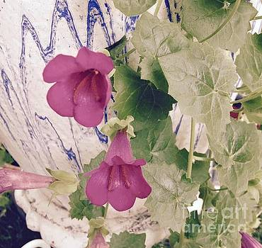 Pink vine in antique pottery by Nancy Pace
