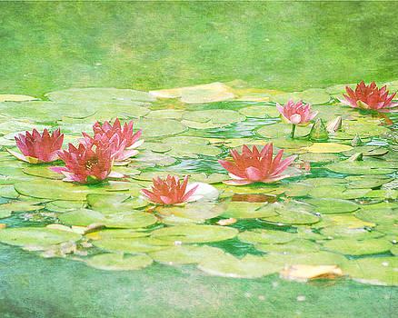 Pink Waterlillies by Ken Reardon
