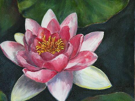 Pink Waterlily by Stephanie Pinnoy