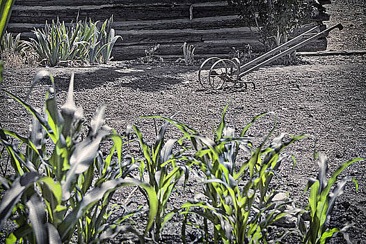 Steve Ohlsen - Pioneer Garden Crops  2 - Pioneer Village