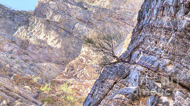 Plant Growth in Rock Wall in Marble Canyon by Gordon Wood
