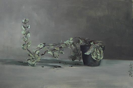 Plant by Josep Roig