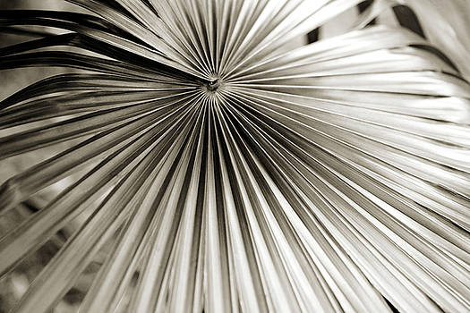 Plant Lines by Marilyn Hunt
