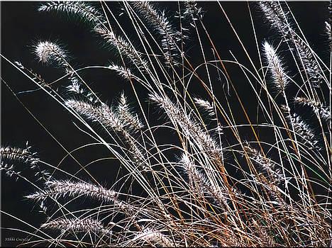 Plant by Mikki Cucuzzo