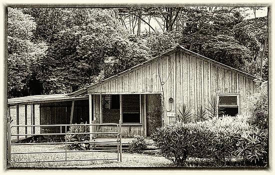 Plantation Cottage #3 by Carolyn Marchetti