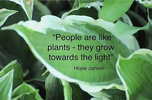 Plants by Lisa DiFruscio