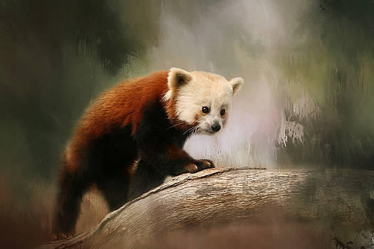 Kim Hojnacki - The Panda Red