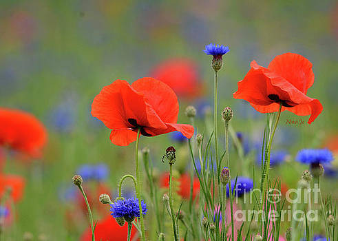 Playful Poppies by Nava Thompson