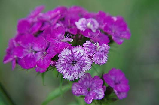 Plenty Purple by Sarah Barber