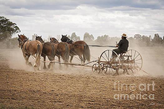 Ploughing the Field by Linda Lees