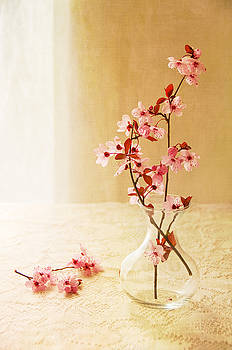 Plum blossoms by Colleen Farrell