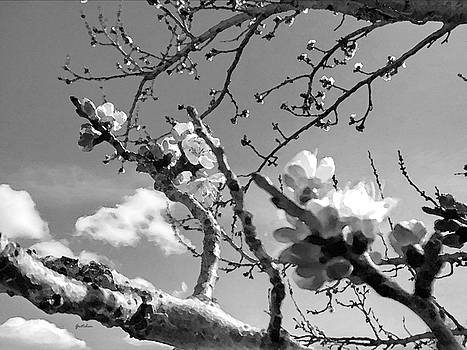 Plum Blossoms in Black and White by Gretchen Wrede