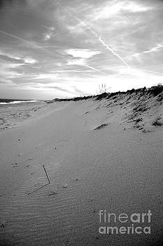 Plum Island Black and White by Sue OConnor