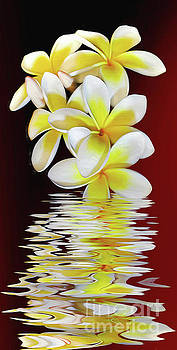 Plumeria Reflections by Kaye Menner by Kaye Menner