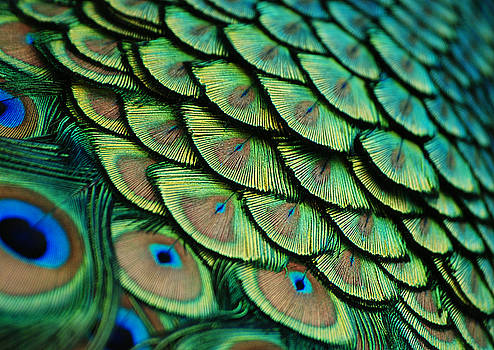 Plumes by Lorenzo Cassina