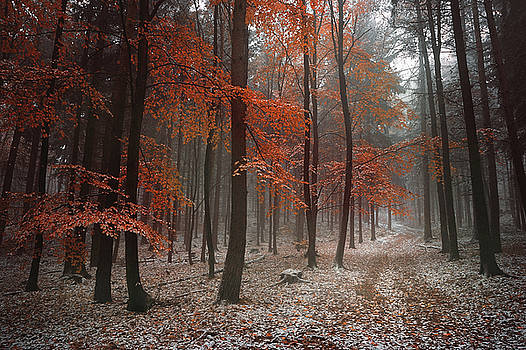 Poem of Autumn Forest by Jenny Rainbow