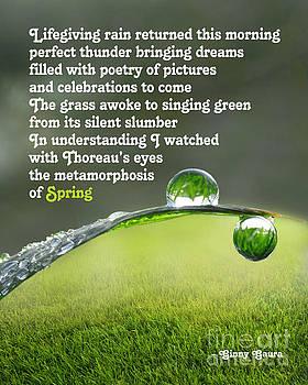 Poetic Storm by Ginny Gaura