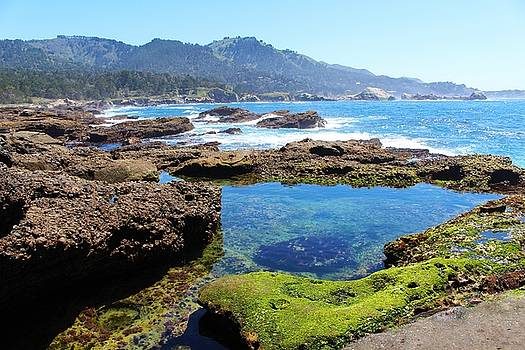 Point Lobos by Caroline Lomeli