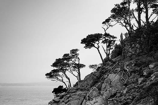David Gordon - Point Lobos III BW