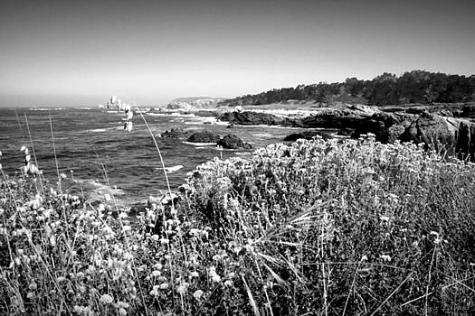 Joyce Dickens - Point Lobos Shore In Bloom B And W