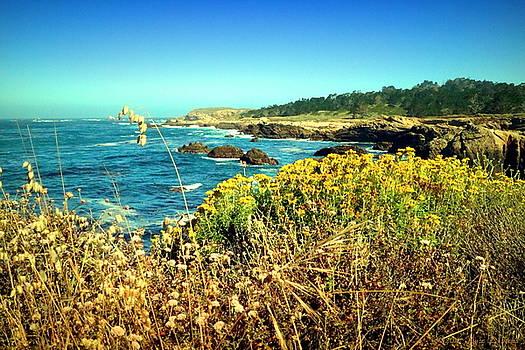 Point Lobos Shore In Bloom by Joyce Dickens
