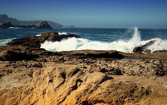 Point Lobos Shore by Joyce Dickens