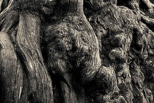 David Gordon - Point Lobos V Toned