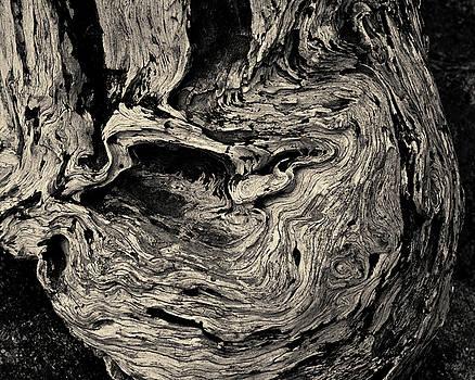 David Gordon - Point Lobos VI Toned