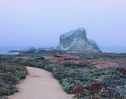 Point Piedras Blancas by Marcia Breznay