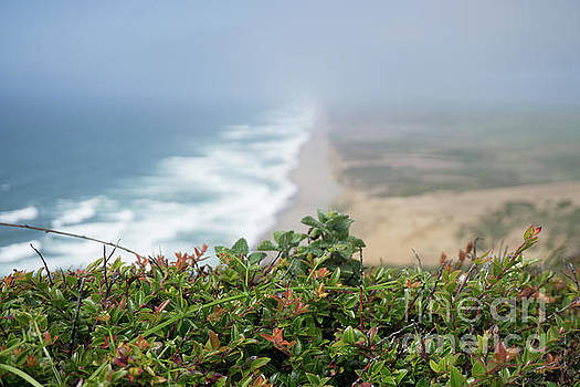 Point Reyes Coastline by Terry Lynn Johnson