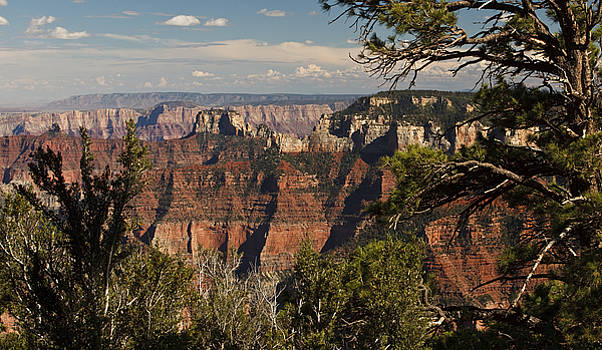 Pointe Imperial - Grand Canyon by Jonas Wingfield