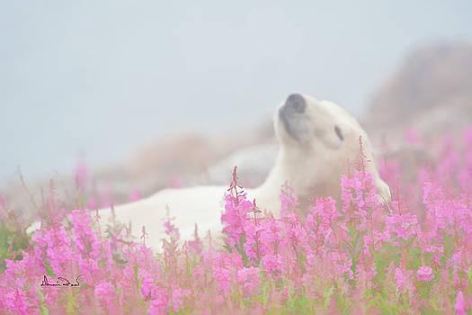 Polar Bear Snooze by Dennis Fast