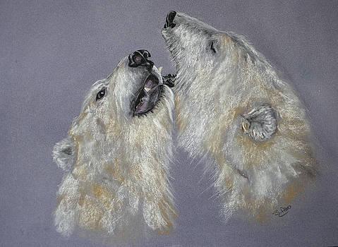 Polar Bears by Sue Arber