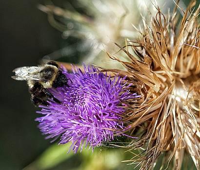Pollen Collector by Nikki McInnes